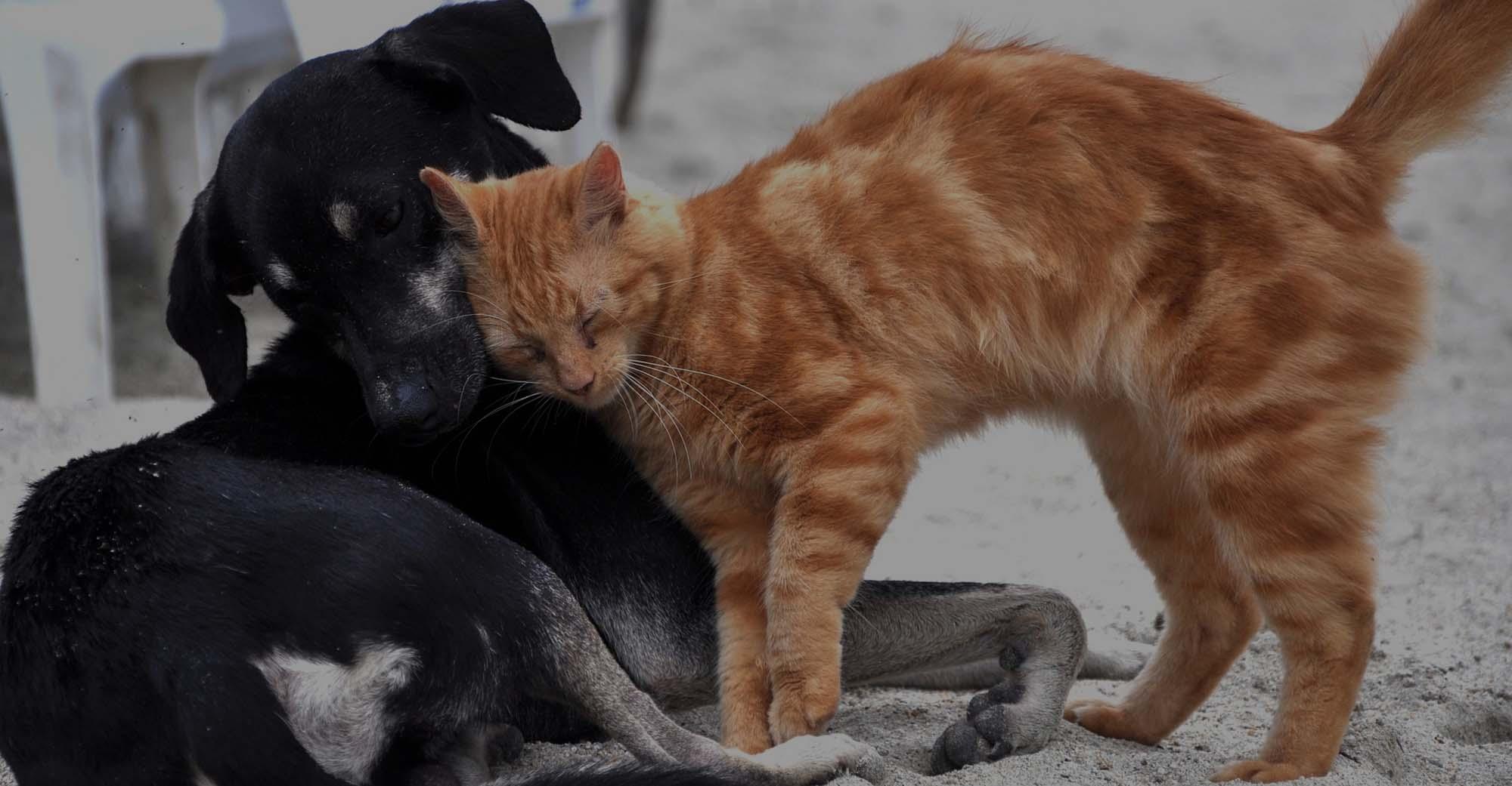 Association Mona-lise refuge pour animaux adoption header