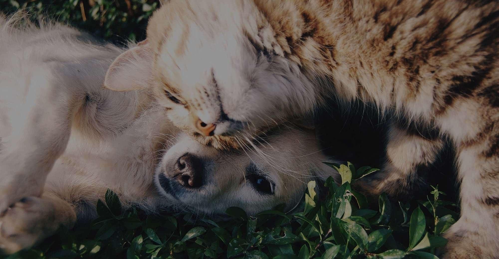 Association Mona-lise refuge pour animaux don header